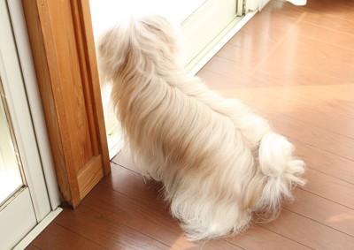 窓際で外を見ている犬