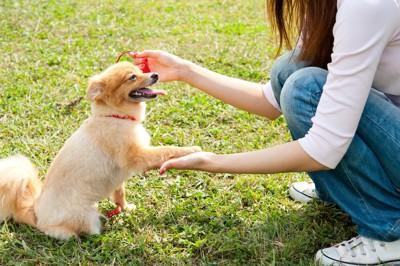 芝生の上に座ってお手をする犬