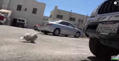 人を警戒し逃げる犬