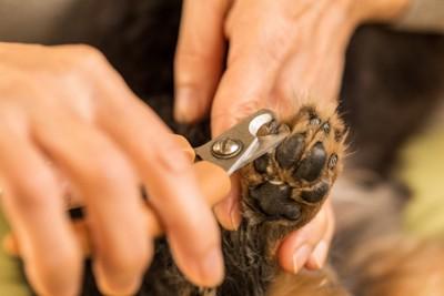 黒い爪の犬の爪切り