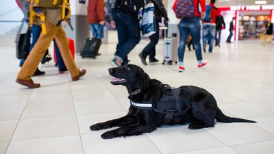 空港で働いている黒い犬