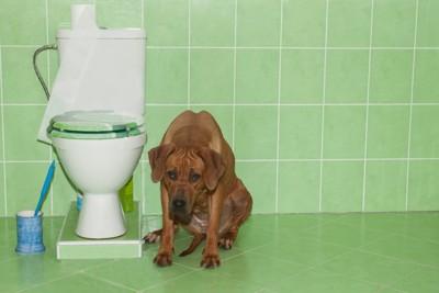 便器のそばに座る犬