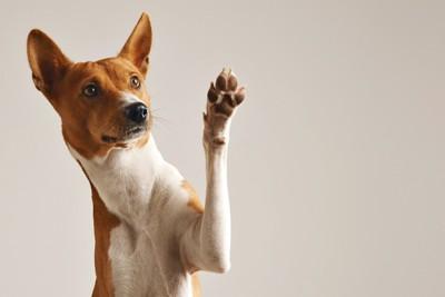 片手を上げている犬