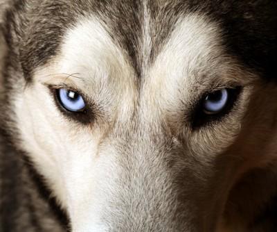 獲物を見つめる犬の目