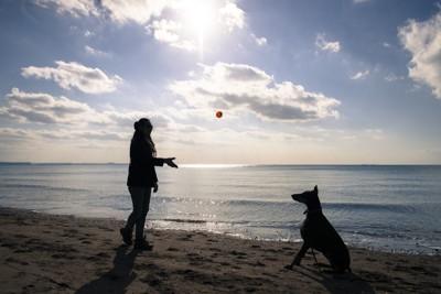 海辺でボールを投げてもらう犬