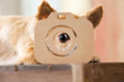 レンズを覗く犬