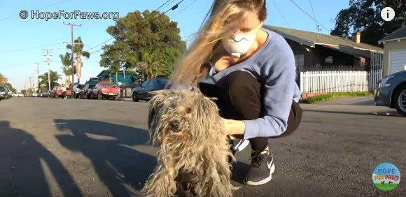 犬を素手で持ち上げる