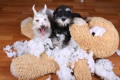 壊れたぬいぐるみと2匹の犬