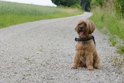 お尻歩きをする犬