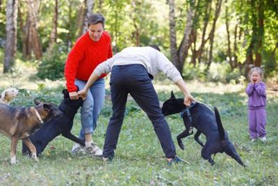 犬の喧嘩を止める男性