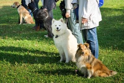 横一列に並ぶ飼い主さんと犬達