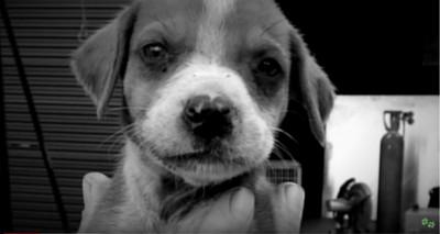 犬のアップのモノクロ写真
