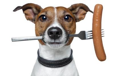 ウィンナーの刺さったフォークをくわえる犬