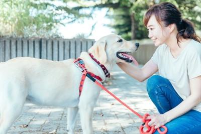 女性に褒められて嬉しそうな犬
