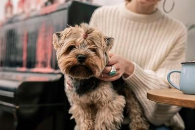 カフェ店内の床に伏せる犬