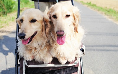 仲良しな二匹の犬