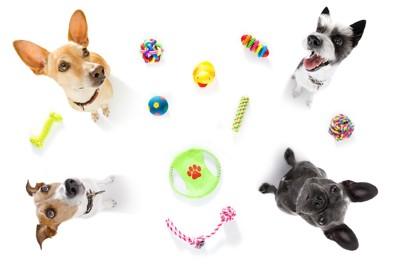 いろんなおもちゃと上を見つめる四匹の犬