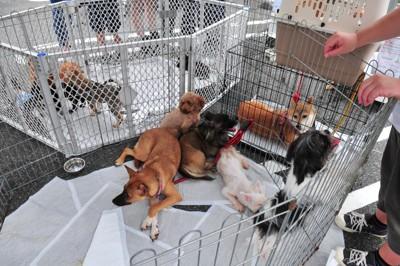 譲渡会の犬たち