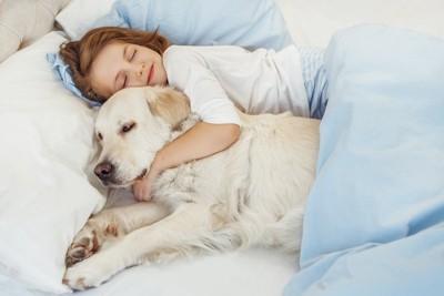 ゴールデンレトリバーを抱きしめてベッドで眠る女の子