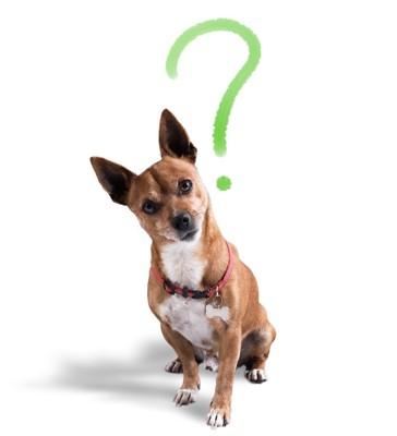 クエスションマークと首をかしげる犬