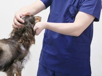 獣医師 診察台の上に犬 ダックス