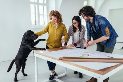 作業中の人々に参加しようとする犬