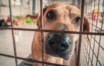 シェルターで暮らす犬