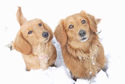 同犬種の二匹