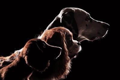 3頭の種類の違う犬たちの横顔