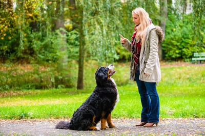 お座りする犬と指示する女性
