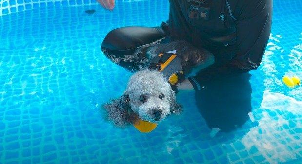 泳ぐわんこ