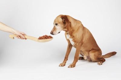ドッグフードと犬