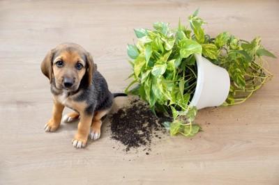 倒れた鉢と犬