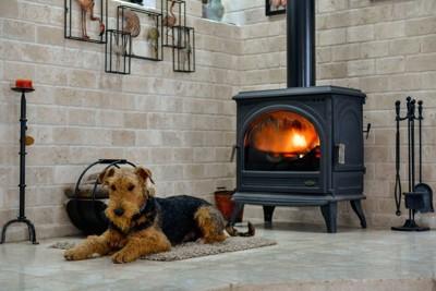 暖炉の前にフセするテリア犬