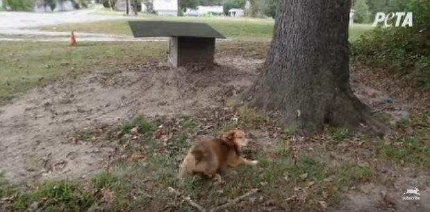 犬小屋の周り