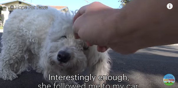 犬をなでる