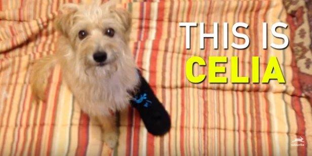 足に包帯をして見上げる犬