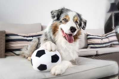 サッカーボールとシェパード
