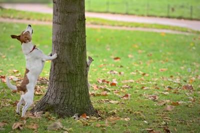 木を見上げる小型犬