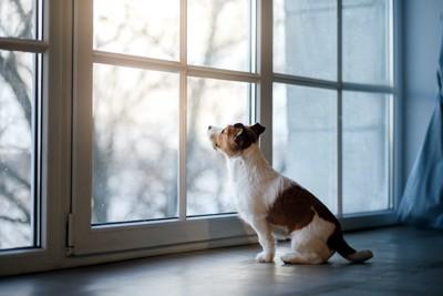 窓辺に座って外の景色を眺める犬