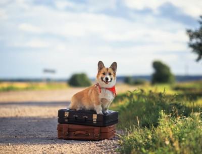 スーツケースの上に乗っているコーギー