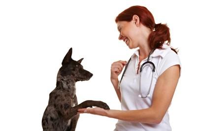 雑種の犬と女性の獣医さん