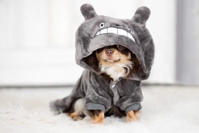 ニットを着た子犬