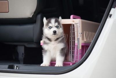 自動車の中のクレートとハスキーの子犬