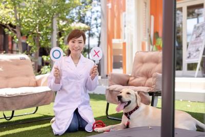 犬とマルバツサイン