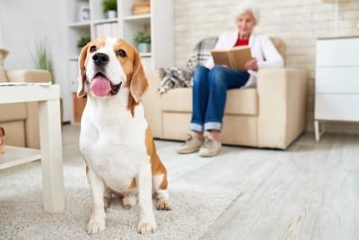 ソファーに座る女性と離れた場所に座る犬