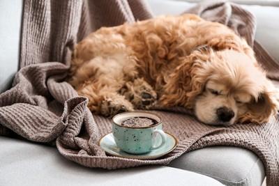 寝ている犬とコーヒー
