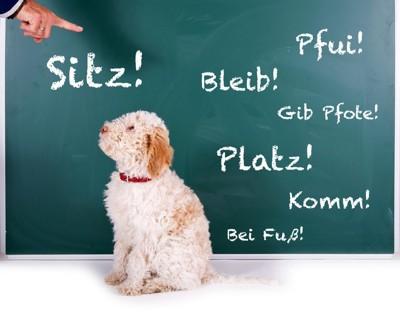 ドイツ語が書かれた黒板と犬