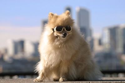 ゴーグルをかけた犬