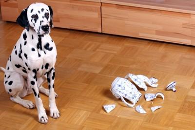割れた花瓶と犬